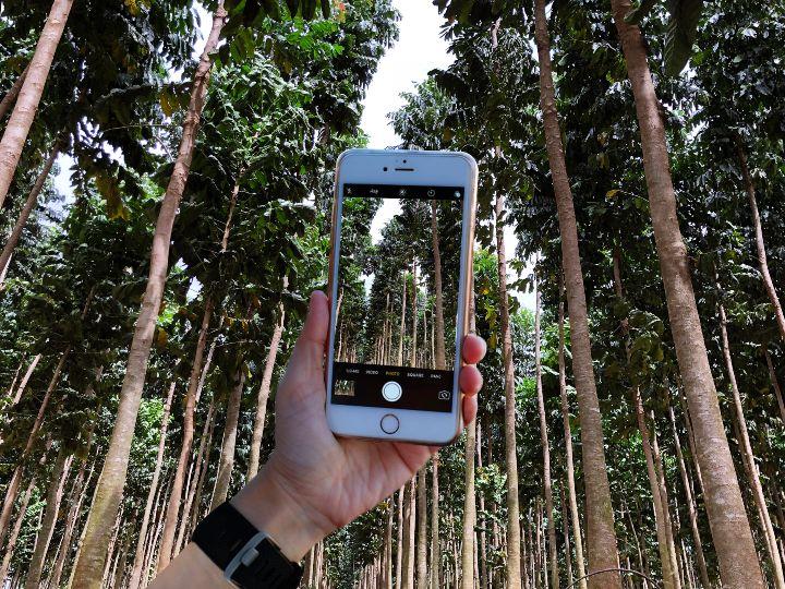 App-Minha-Floresta