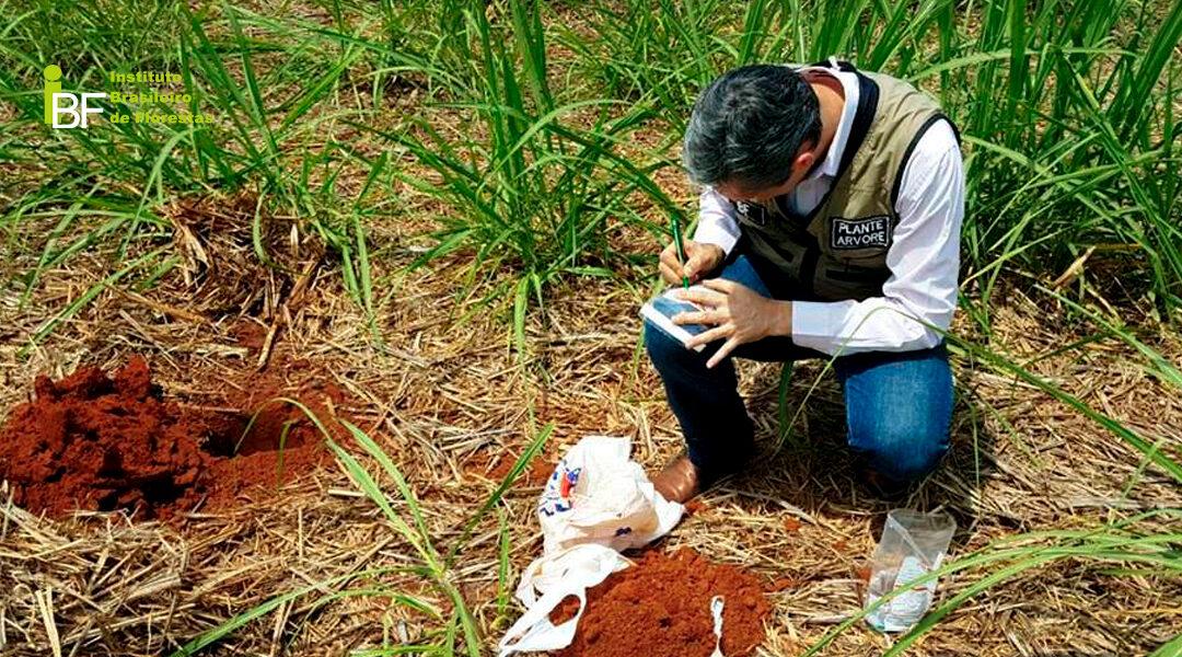 Como coletar a amostra de solo