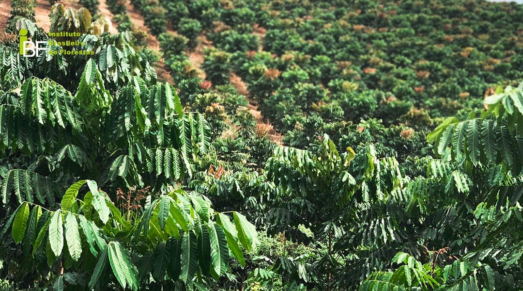 O que são Florestas Plantadas?