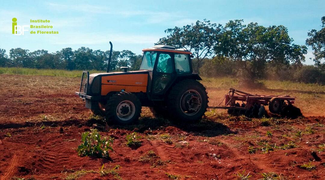 O nível de manejo no plantio de Mogno Africano