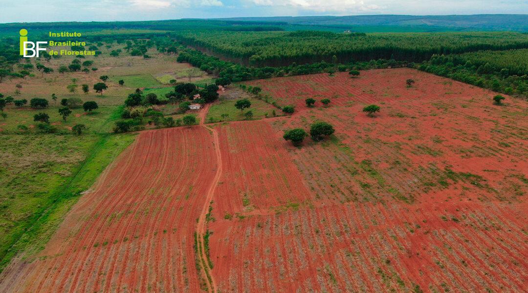 Preço de aquisição da terra para Mogno Africano