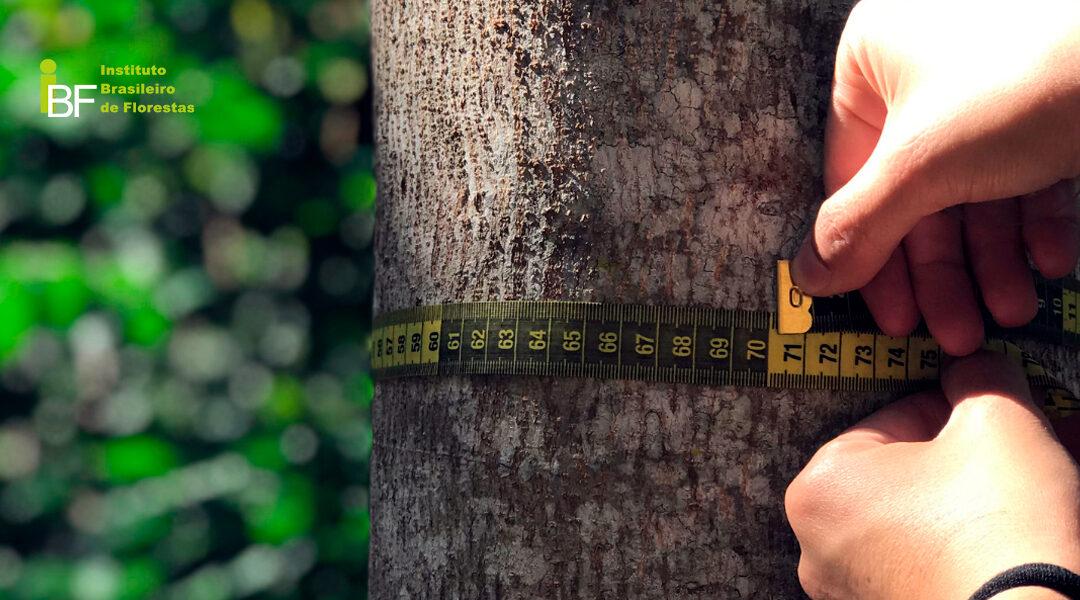 A importância do inventário florestal para o Mogno Africano