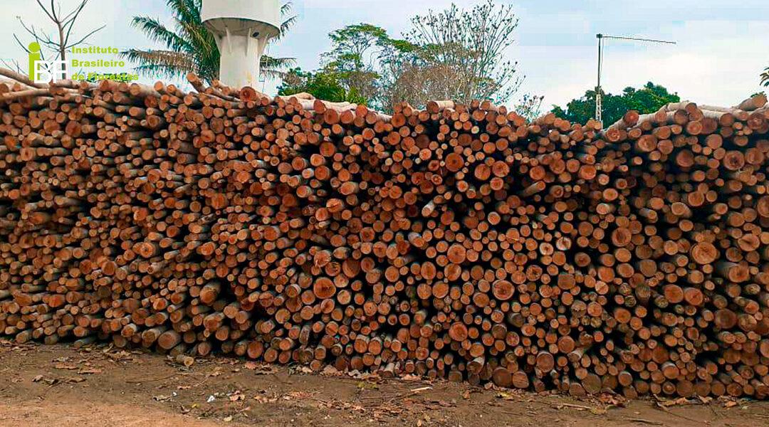 mercado da madeira de Mogno Africano