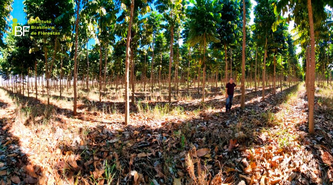 O perfil do investidor florestal